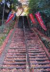 鰐淵寺石段
