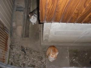 ノラ猫たち